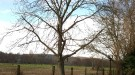 Taille d'arbre